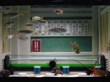 ヨコハマおもしろ水族館 | 世界最大級のチャイナタウン「横浜中華街」周辺で遊びつくす!