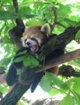 横浜市立野毛山動物園 | 野毛山地区