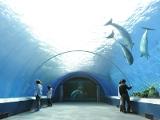 【候補①】横浜・八景島シーパラダイス | 横浜のアミューズメントパークを家族で楽しむ1日コース