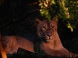 【候補②】よこはま動物園ズーラシア | 横浜のアミューズメントパークを家族で楽しむ1日コース