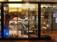横浜税関資料展示室 | 学習・体験