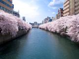 大岡川 | 春のお花見コース(ベイエリア)