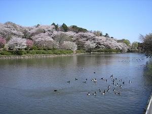 神奈川県立 三ツ池公園
