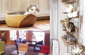 猫カフェ「れおん」