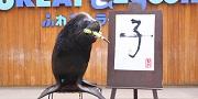横浜・八景島シーパラダイス 新春イベント