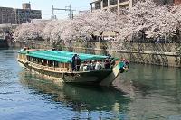 【予約制】正義丸 桜見物お花見屋形船