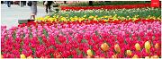 第42回よこはま花と緑のスプリングフェア 2020