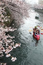 Eボート桜クルーズ