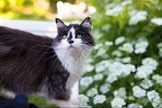 ArtGalley山手「第11回 猫・ねこ写真展 PART1」