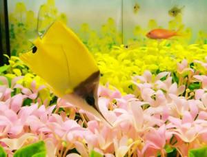 春の特別展示~海の中も春色~スプリン魚大集合