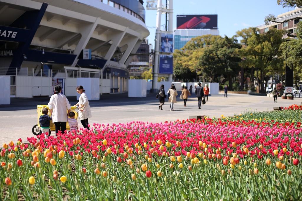 横浜公園 | サブ画像2